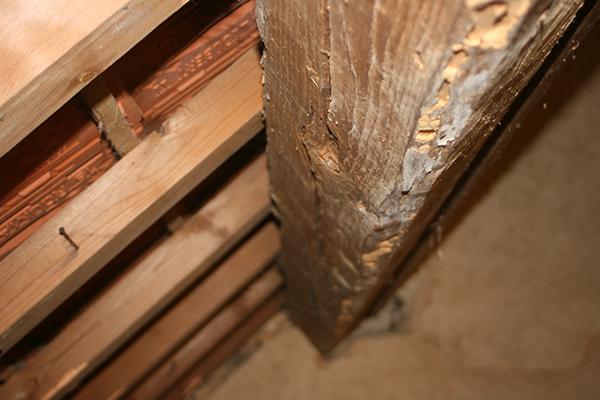 Renforcement et traitement structures bois - Maindron